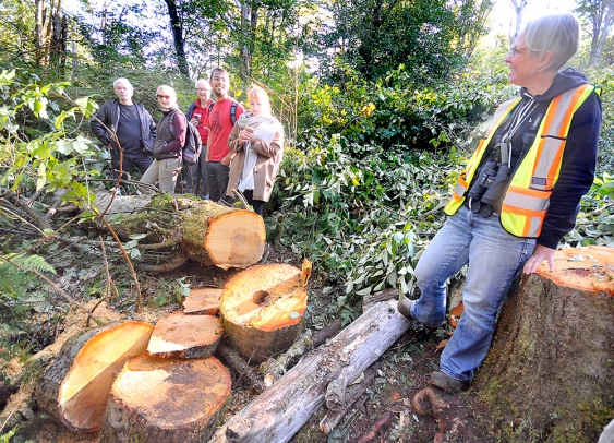 Burnaby Mountain Illegal Tree Cutting 4